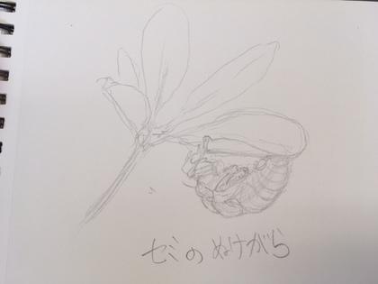 2017-07-21T08:02:13.JPG
