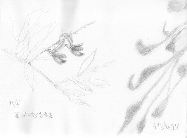 hagi-kikyou094zpv.jpg