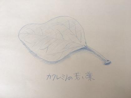 2017-08-21T18:08:31.JPG