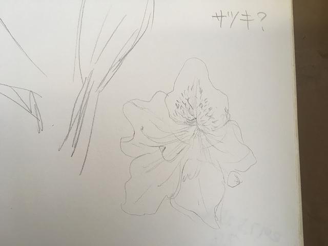 IMG_1279zp.JPG